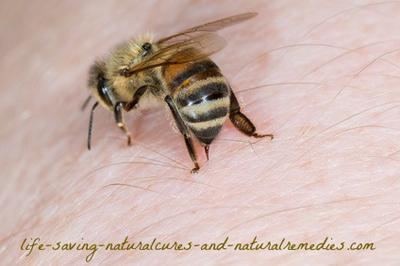 Natural Remedies For Dog Bee Stings